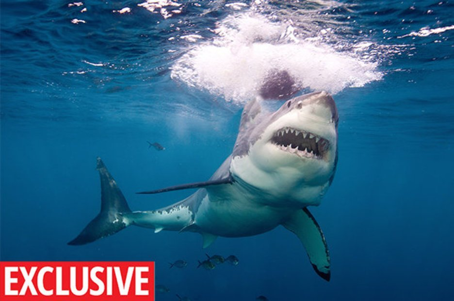 Wildlife expert reveals what to do if you see a SHARK in the sea