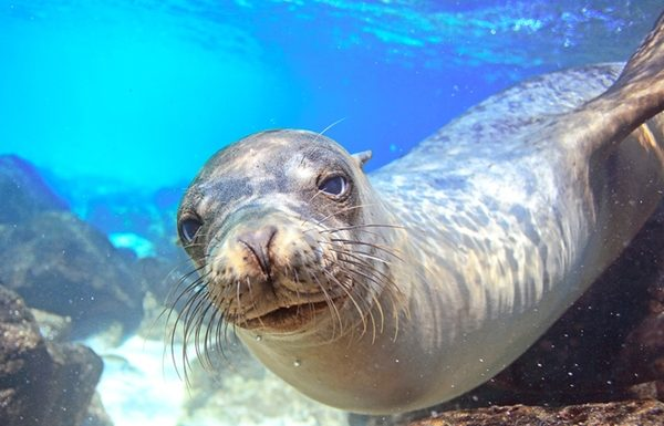 Avanti Provides Tips for Travel Agents Booking the Galapagos