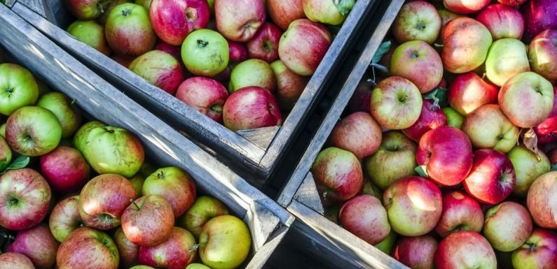 The 25 Top Places to Go Apple Picking Across America
