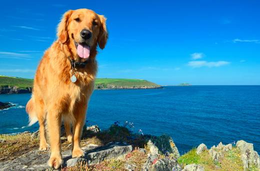 Pet-friendly Ireland: 100 great places to eat, stay and play with your pooch!