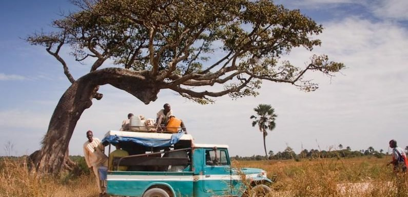 Sacred trees and deserted beaches: Visiting Senegal's '70s tourist hub