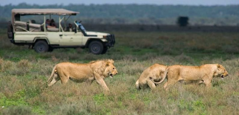 When is the best time to go on safari and where? ·