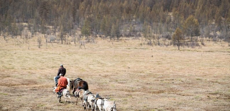 You Can Now Book a Stay With a Reindeer Herding Tribe in the World's Most Remote Airbnb