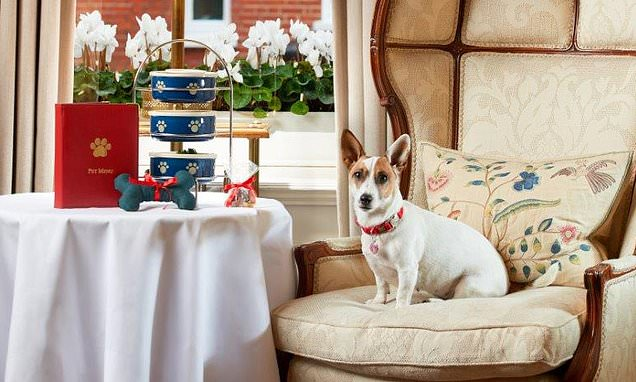 The barking life of a pet concierge! Hotel gives pooches VIP treatment