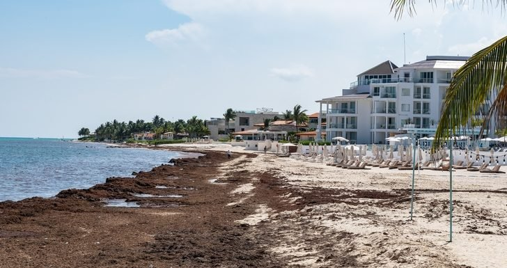 Experts Predicting Sargassum Influx on Mexican Caribbean Beaches in 2019