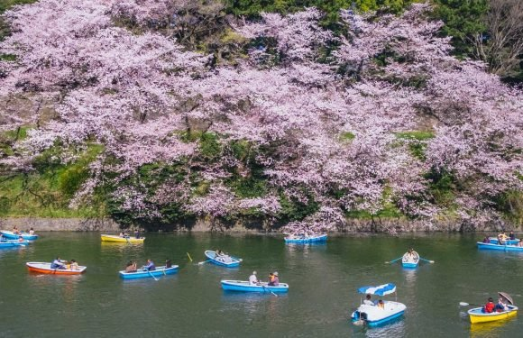 Japan's Cherry Blossoms Are Predicted to Arrive Early This Year — Here's When You Can Expect to See Them