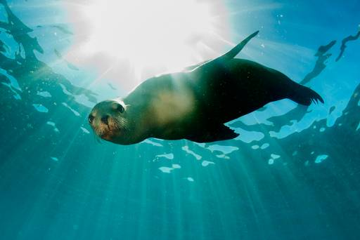 Can human beings and animals live happily ever after on the Galapagos?