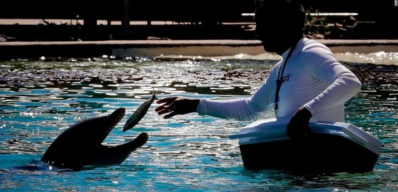 4 dolphins have died within 2 years at an Arizona facility. Now it's closing.