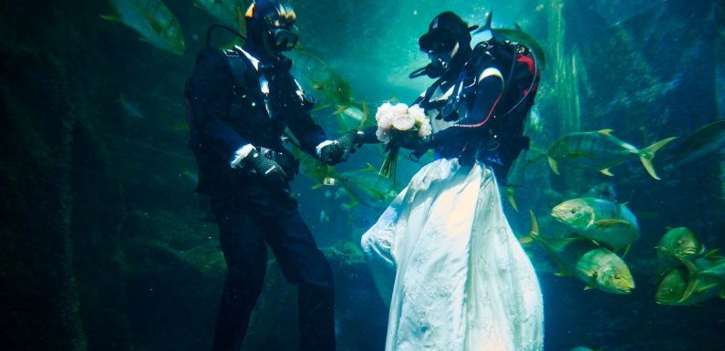 Win an underwater wedding photoshoot at SEA LIFE Melbourne ·