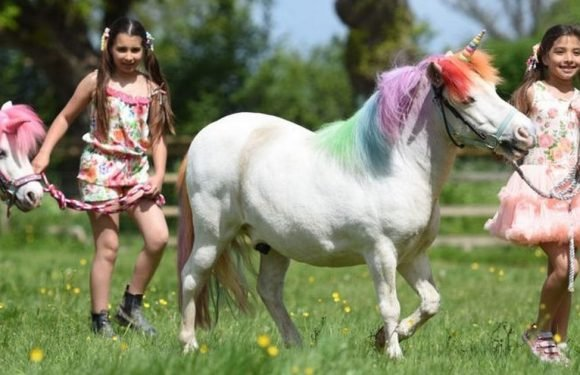 Magical Unicorn Land to tour the UK where kids can meet and ride unicorns