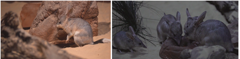 Adorable Easter treat at WILD LIFE Sydney Zoo ·