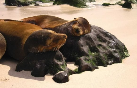 World Expeditions launches first class Galapagos Cruise experience ·