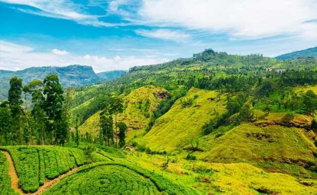 UK tourists can get a free Sri Lanka visa for the next six months