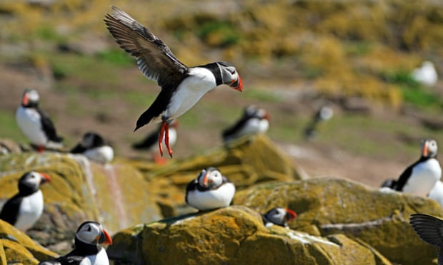 Send a tip on places to see UK wildlife for the chance to win a £200 hotel voucher