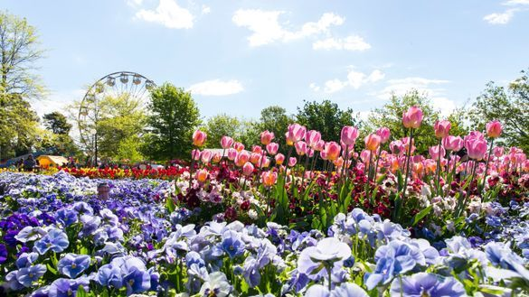 Preparations have begun for Floriade 2019 ·