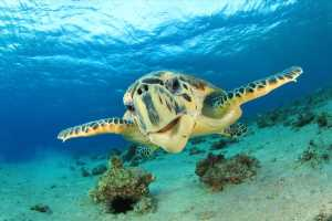Sunday Is World Sea Turtle Day: How Travelers Can Make a Difference