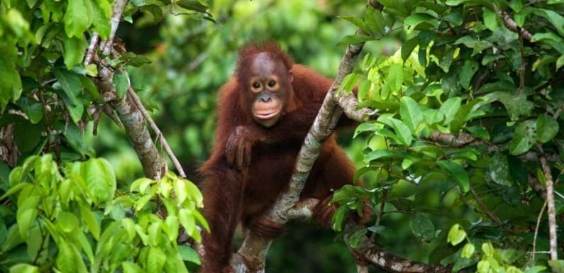 The world's most endangered rainforests