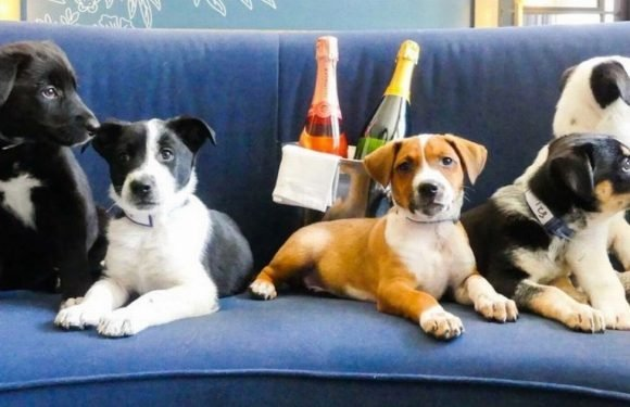 You can have puppies and prosecco delivered to your room in hotel's new service