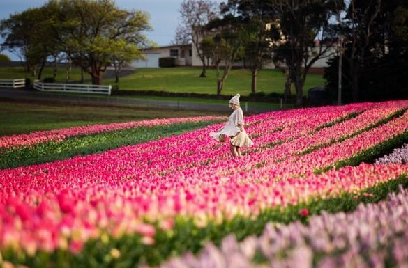 What's on Spring Events in Tasmania ·