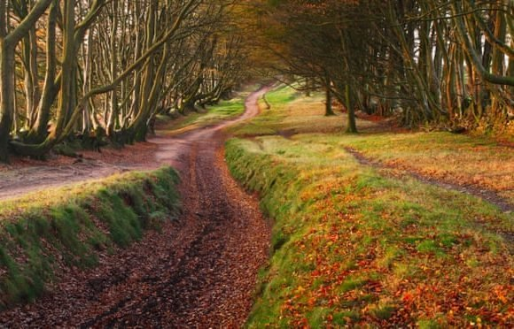 20 great pub walks, chosen by nature writers