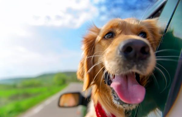 Uber to Launch New Pet Feature in Select US Cities This Fall