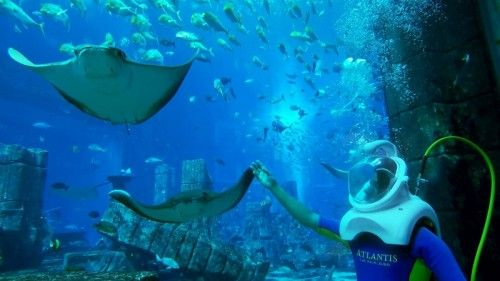 Atlantis, The Palm launches World's Deepest Aqua Trek Experience ·