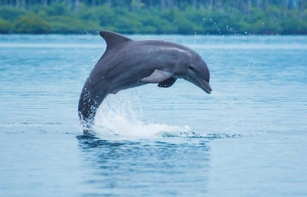 See Dolphins in Their Natural Environment at These Hotels
