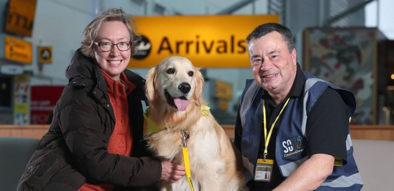 Adorable dogs land job at UK airport to help soothe nervous passengers