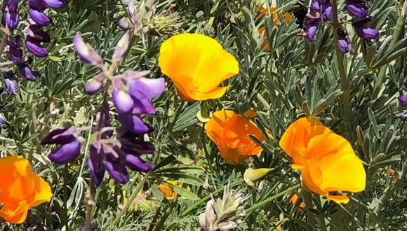 PG Museum of Natural History hosts annual Wildflower Show ·