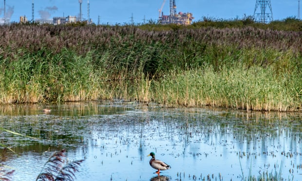 10 of the UK's best nature reserves on reclaimed land