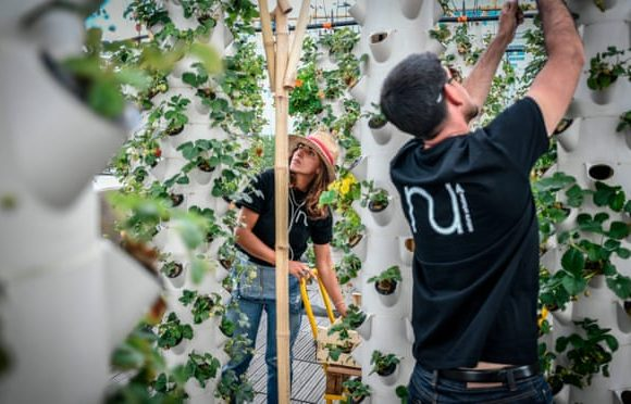 The future of food: inside the world's largest urban farm – built on a rooftop