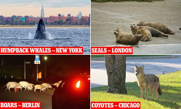 New book reveals the amazing animals that live in big cities