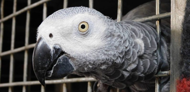 Swearing parrots removed from UK park after learning bad habbit