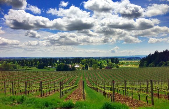 The Winery Everyone Is Talking About In Your State