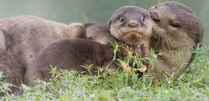 2020's Funniest Wildlife Photos champion conservation with comedy
