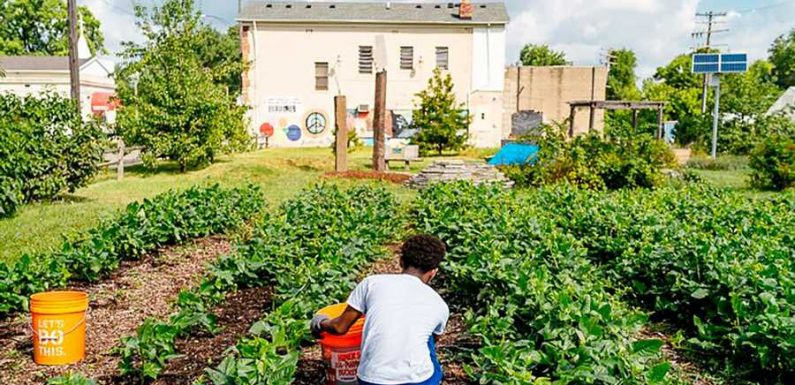 Meet the Farms, Restaurants, and Organizations Committed to Keeping Detroit Well Fed