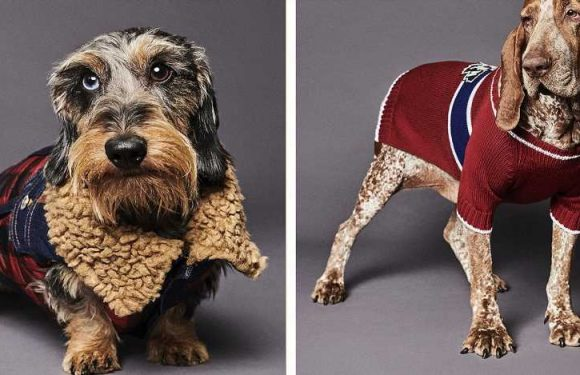 Instagram Isn't Ready for These Designer Dog Jackets Dsquared2 Just Launched