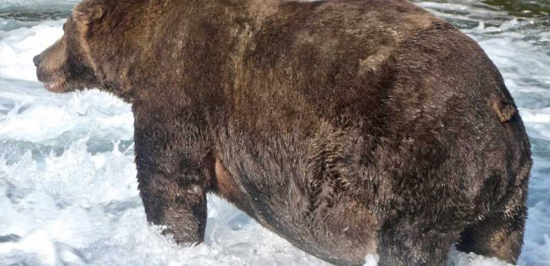 Meet the Winner of Fat Bear Week 2020, Who Continued 'to Eat Until His Belly Seemed to Drag Along the Ground'
