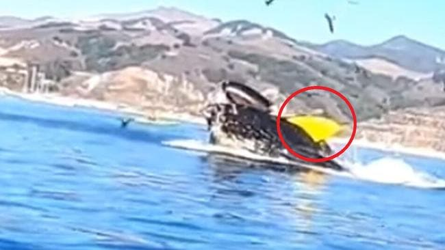 Whale surprises kayakers by breaching underneath them