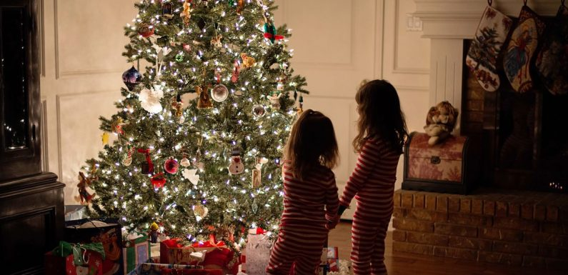 Do You Know the History of the Christmas Tree?