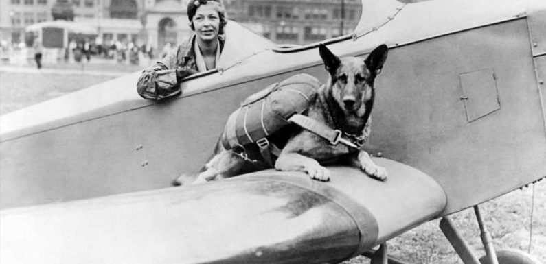 Everything to Know About Flying With A Dog