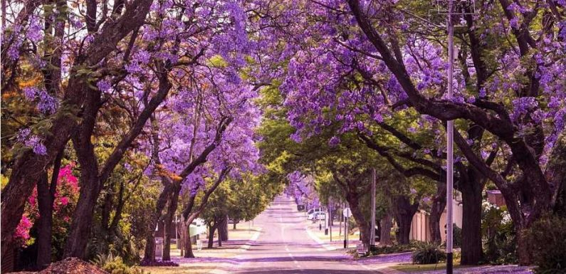 The world's beautiful trees will surprise you