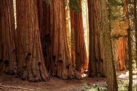 Adventures and Tree Therapy in Sequoia National Park