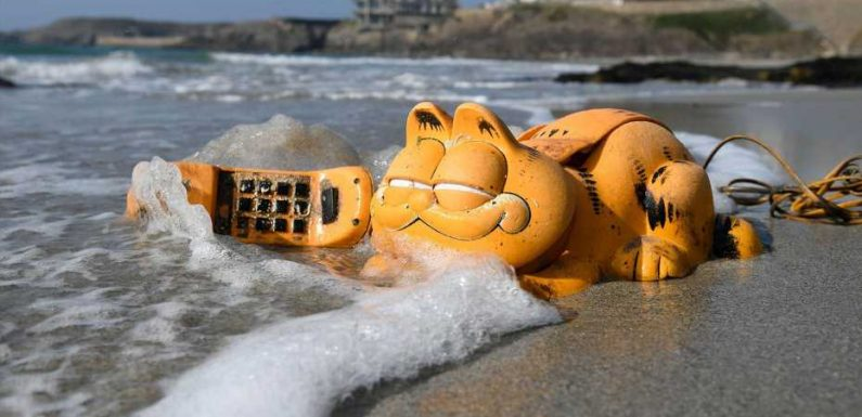 Strange things that have washed up on beaches