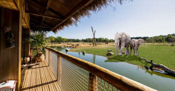 Inside new UK safari lodge where you can watch elephants as you sit in your room