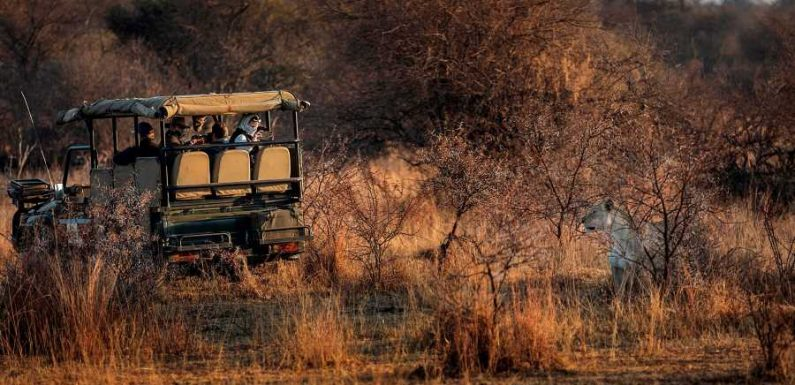 How to Plan a Safari in the Time of COVID-19, According to an Expert