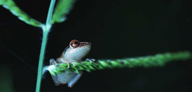Puerto Rico Wants You to 'Adopt' an Adorable Little Frog This Holiday Season