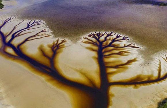 Drone photos show incredible tree 'artwork' on NSW's Cakora Lake