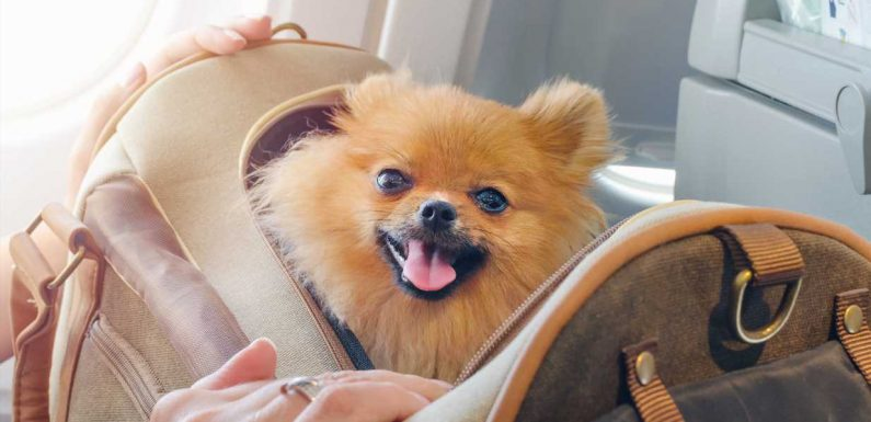 Dog owners speak out as airlines ban emotional support animals: 'I will not be putting the animal who has saved my life in cargo'
