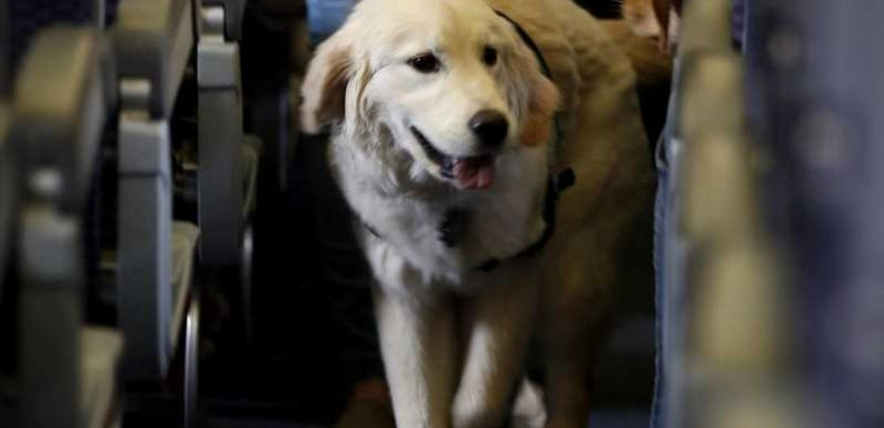 American Airlines bans emotional support animals